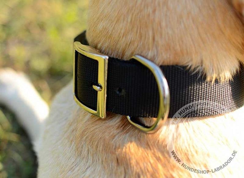 Hundehalsband schwarz fuer Labrador