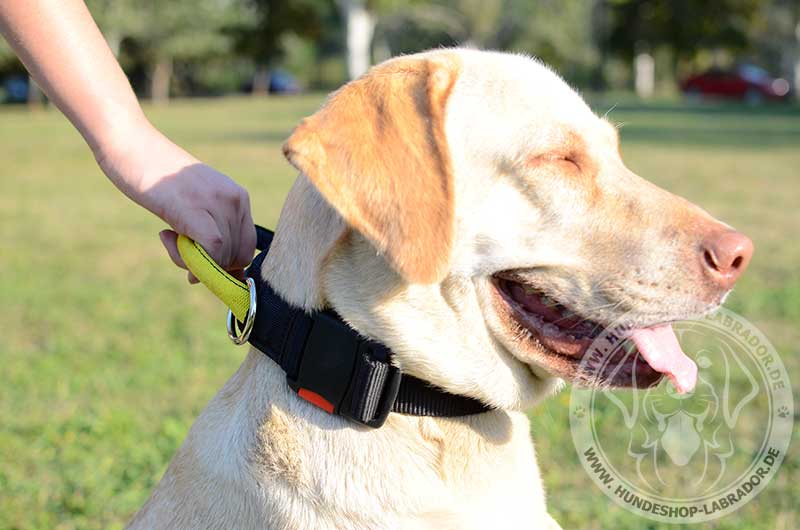 Hundehalsband multifunktionell fuer Labrador