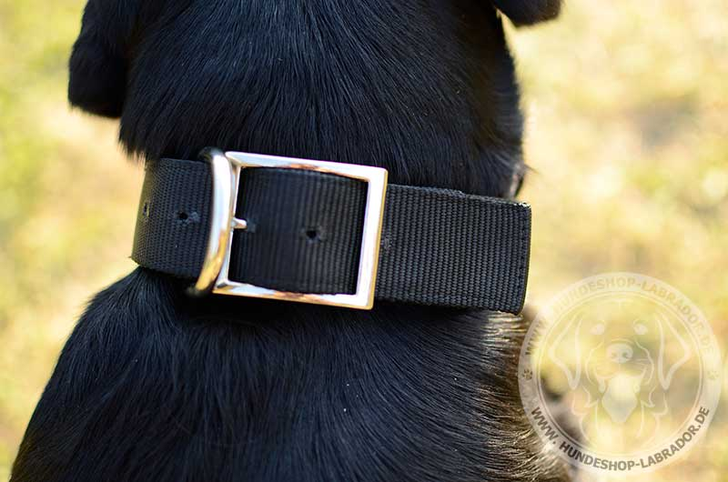 Hundehalsband schwarz und praktisch