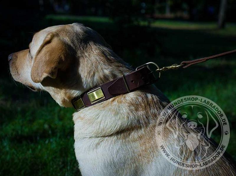 Hundehalsband stilvoll fuer Labrador