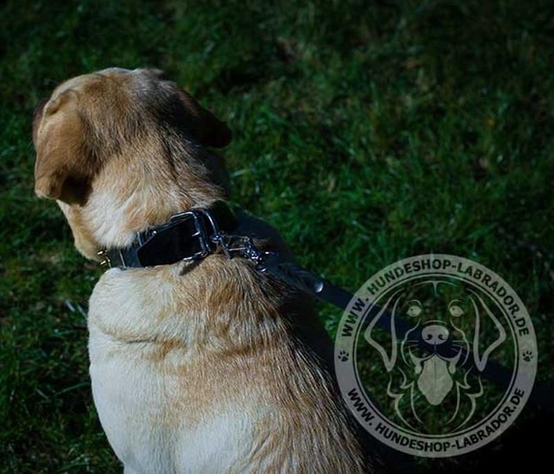Hundehalsband attraktiv  fuer Labrador