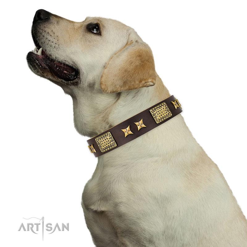 Hundehalsband aus braunem Leder  fuer Labrador