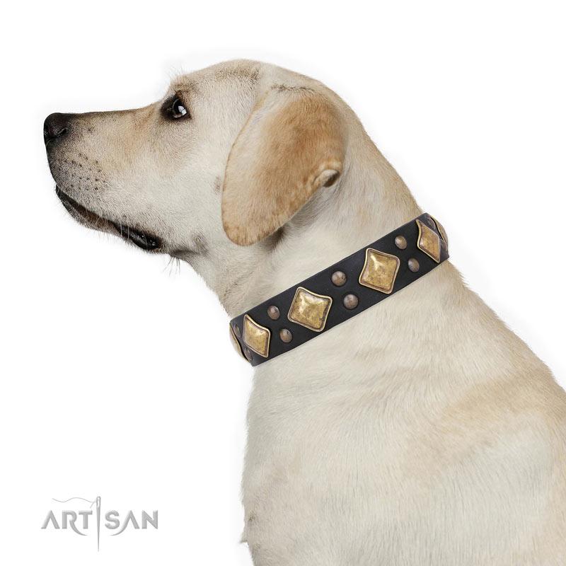 Hundehalsband robust und bequem  fuer Labrador