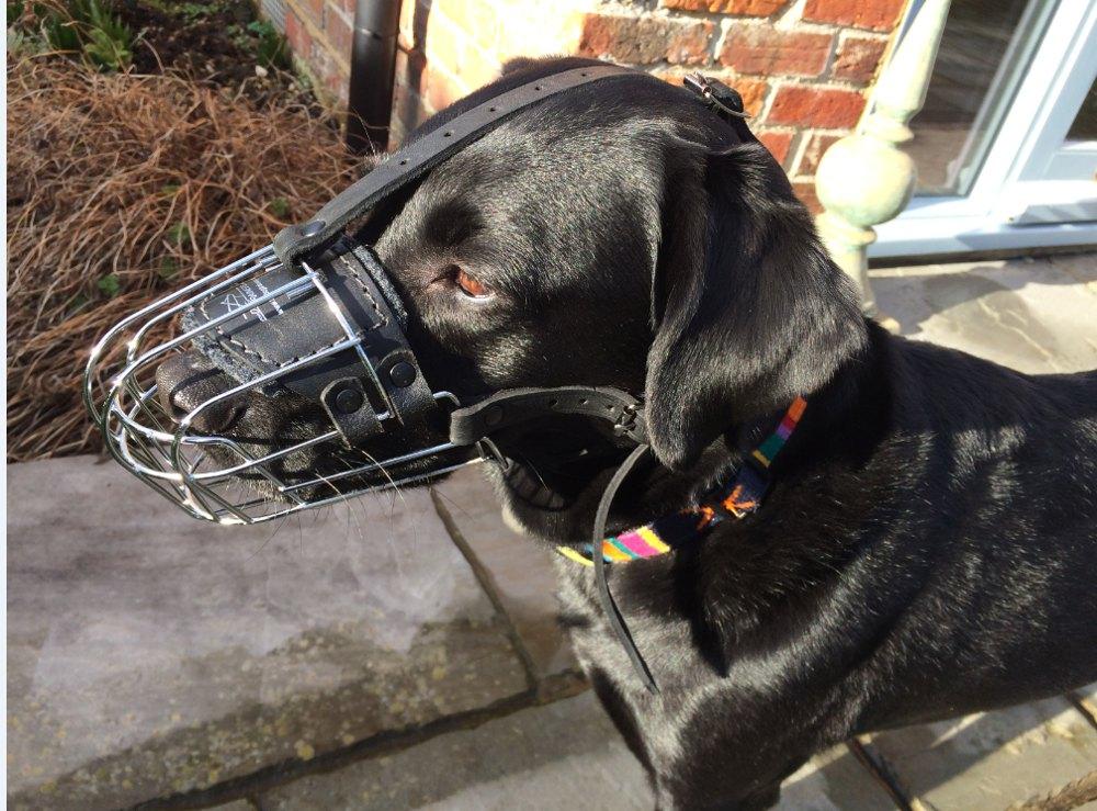 Hundemaulkorb aus Draht