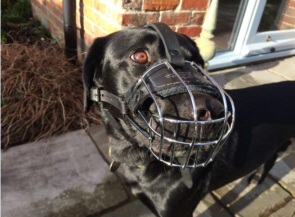 Hundemaulkorb Draht