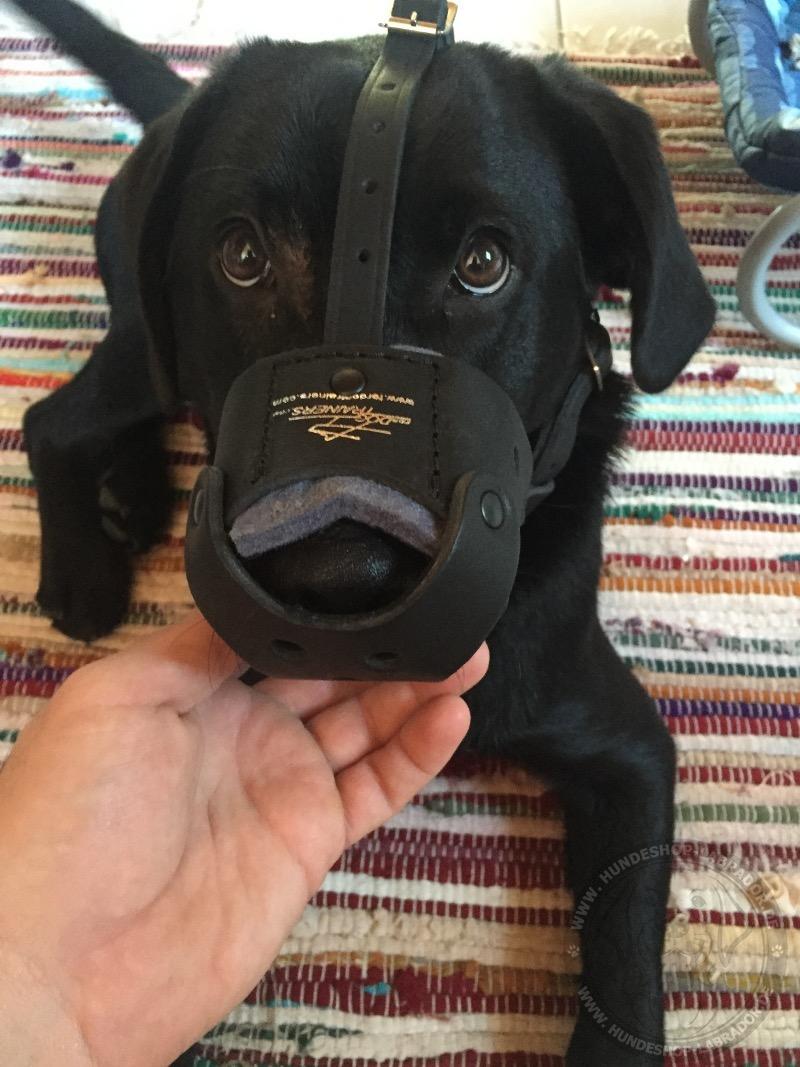 Maulkorb für Labrador