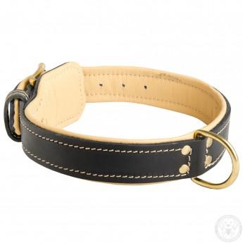Edles Hundehalsband aus Leder mit extra-weicher Polsterung für Labrador