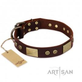 "Wonderful Brown Leather Dog Collar for  Labrador ""Shining Armour"""