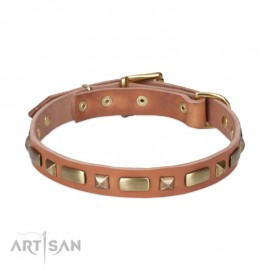 Perfect Leather Dog Collar with Brass Decorations