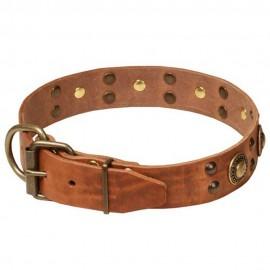 Schönes Halsband aus Leder für Labrador in originellem Design