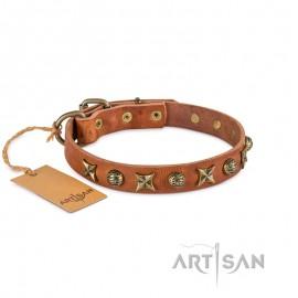 Ledernes Hundehalsband FDT Artisan mit Messing Halbsphären und Sternen