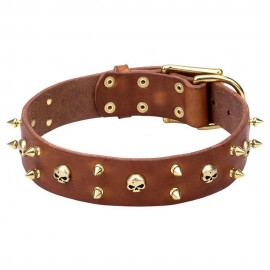 Brass Spiked Wide Leather Labrador Collar with Skulls