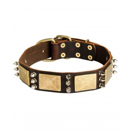 Labrador Collar of Leather with Spikes and Brass Plates