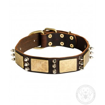 Leather Dog Collar with Spikes and Brass Plates