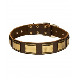 Leather Dog Collar for Labrador with Brass Plates