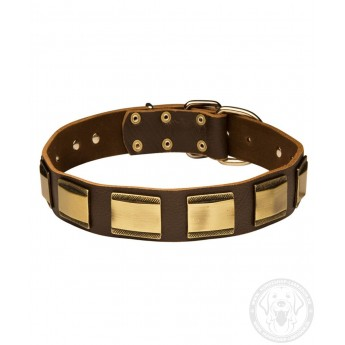 Leather Dog Collar with Brass Plates