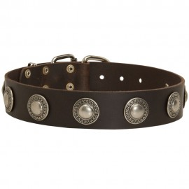 Labrador Collar Leather with Decorative Nickel Circles