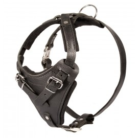 Super Strong Padded Leather Labrador Harness