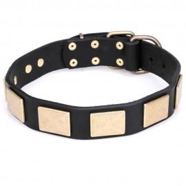 Exklusives Halsband aus Leder für Labrador mit Messing Platten