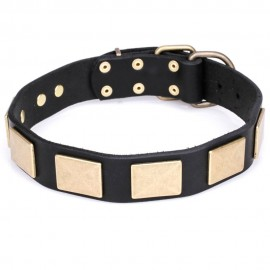 Wide Leather Labrador Collar with Brass Plates