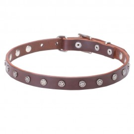 Star Studded Narrow Leather Labrador Collar