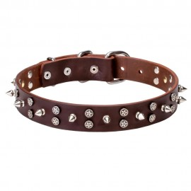 Labrador Collar of Leather with Stars and Spikes