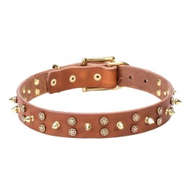 Labrador Collar Leather with Brass Stars and Spikes