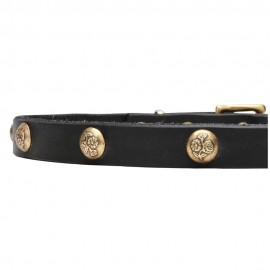 Leather Dog Collar with 1 Row Brass Studs