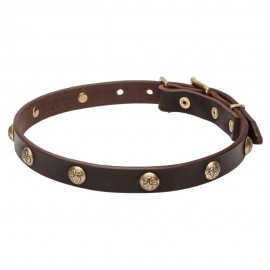 Labrador Collar Leather with One Row Brass Studs