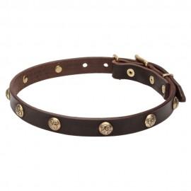 Starkes Halsband aus Leder für Labrador mit Messing Dekoration
