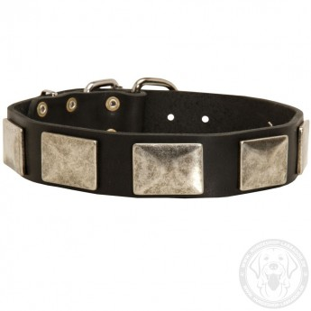 Leather Dog Collar with Vintage Nickel Plates