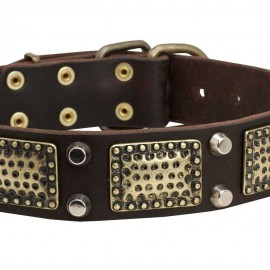 Dog Leather Collar with Vintage Brass Plates and Nickel Studs