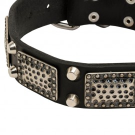Decorated Leather Dog Collar with Brass Plates and Nickel Pyramids