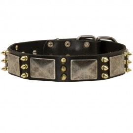 Labrador Collar, Leather, Spikes and Massive Plates