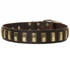 Leather Dog Collar with Small Brass Plates