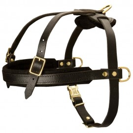 Leather Dog Harness for Labrador Sports, Training and Walking
