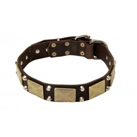 Leather Dog Collar with Brass Plates and Nickel Cones