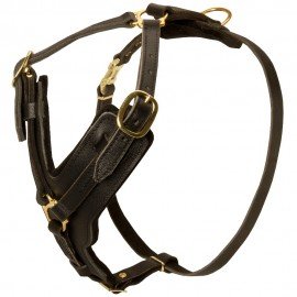 Best Harness for Labrador Training and Work