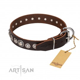 """Brown attractive Leather Dog Collar """"Step and Sparkle"""" FDT Artisan"""