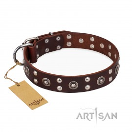 """Labrador Leather Dog Collar Brownwih exciting Style """"Pirate Treasure"""""""
