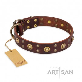 """Brown Leather Dog Collar  FDT Artisan """"Caprice of Fashion"""" for Labrador"""