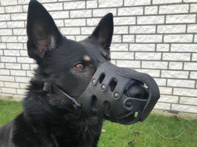 Maulkorb für Hund