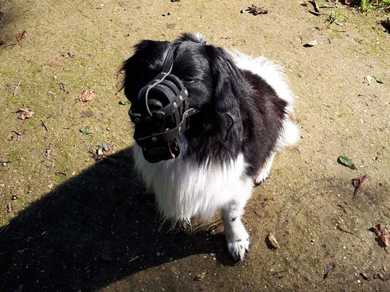 Maulkorb aus Leder für Hunde
