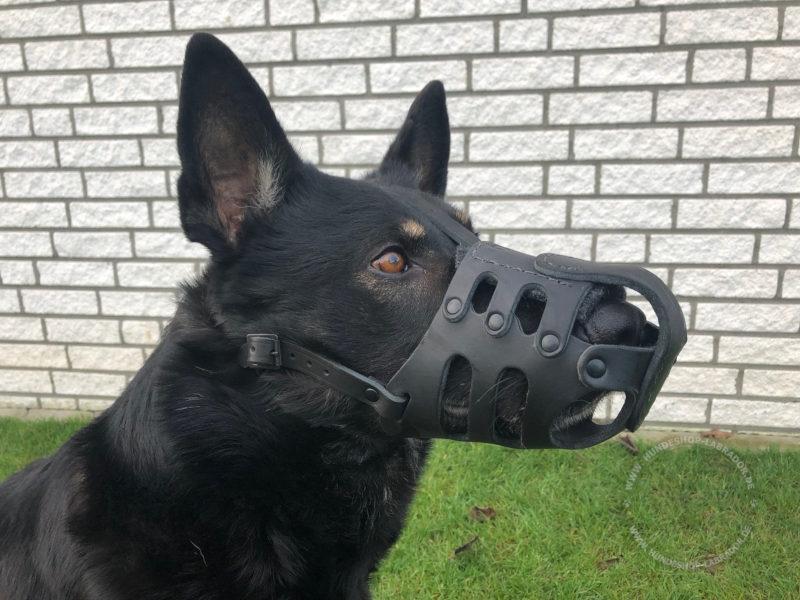 Maulkorb für Labrador und andere Hunderassen
